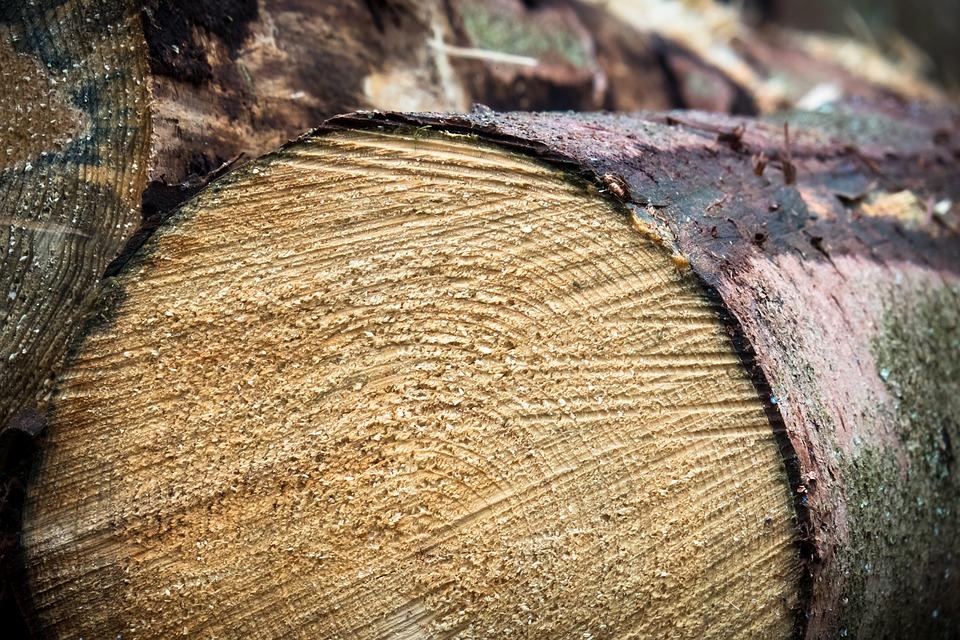 Sector industria madera barajaspkg